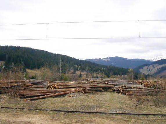 Holzindustrie Schweighofer, acuzată de comerț ilegal cu lemn