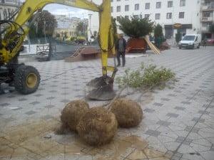 copaci piateta