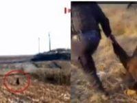 VIDEO: Jandarmii au capturat un urs ajuns aproape de casele unor oameni din judetul Bacau