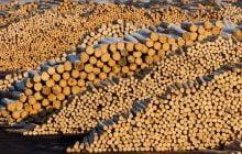 Ministerul Apelor și Pădurilor va monitoriza, împreună cu Gărzile Forestiere, activitatea Holzindustrie Schweighofer