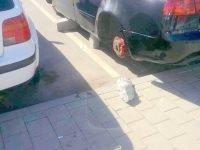 VIDEO: Surpriza neplacuta pentru un barbat care si-a lasat masina in parcarea unui supermarket